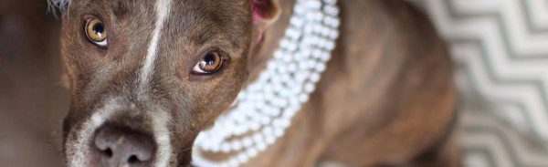 How to raise money for animals in need