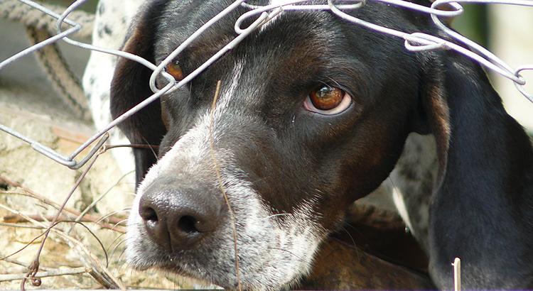 Last chance animal rescue